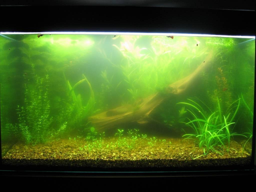 Причины цветения аквариума и методы решения проблемы