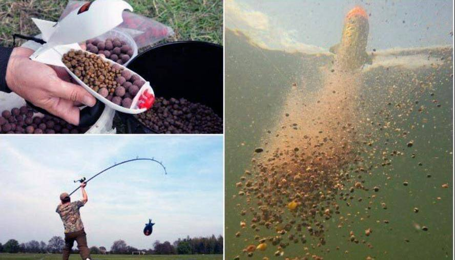 Бойлы на карпа: как выбрать и применять насадку - рыбачок!сайт рыбачок