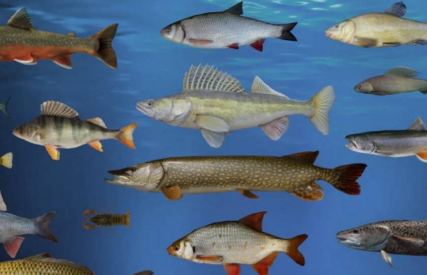 Рыбы фото и описание – каталог морских и пресноводных рыб ? prorybu.ru
