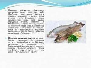 Рыба сом — польза и вред для организма