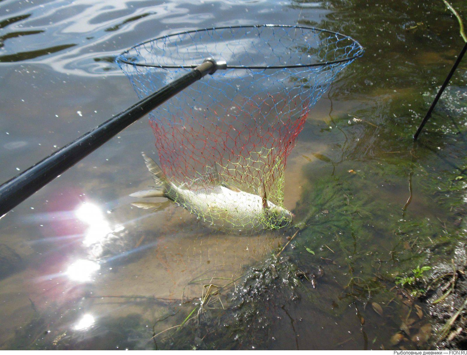 Муромское озеро - всё о рыбалке на водоеме, для рыбаков города шатура.