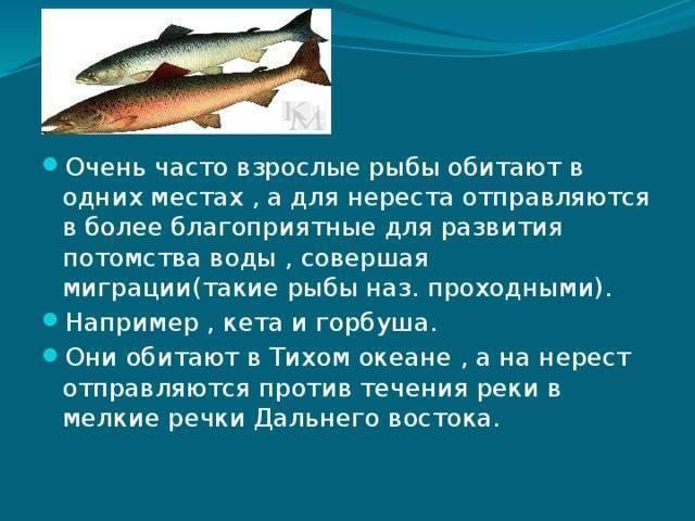 Сомики аквариумные: описание, виды и уход в домашнем водоеме