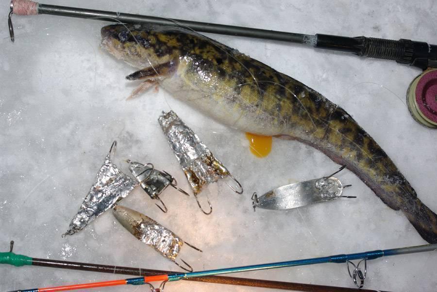 Ловля налима осенью на фидер: секреты успешной рыбалки + видео