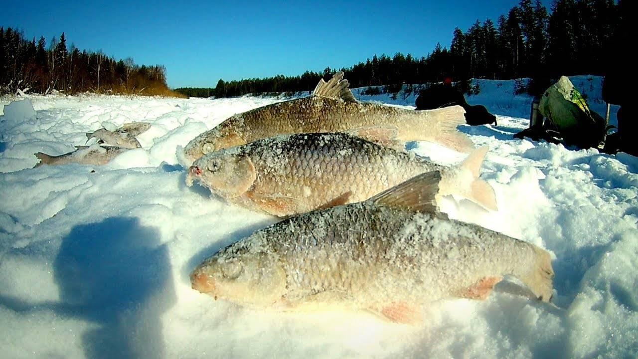 Все о рыбалке в беларуси