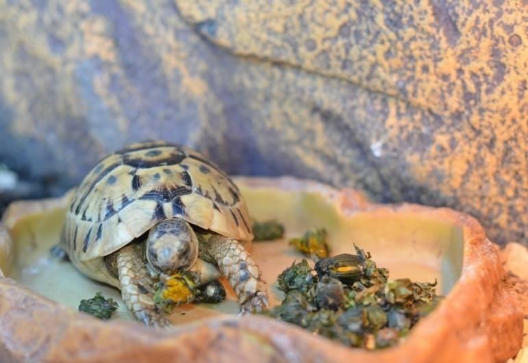 Как приручить красноухую и сухопутную черепаху