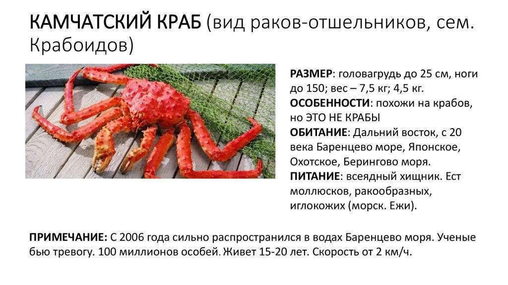Рак отшельник (морской и сухопутный), описание, содержание