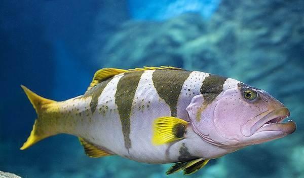 Рыбы (pisces)