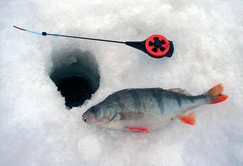 Ловля окуня зимой на мормышку-безмотылку