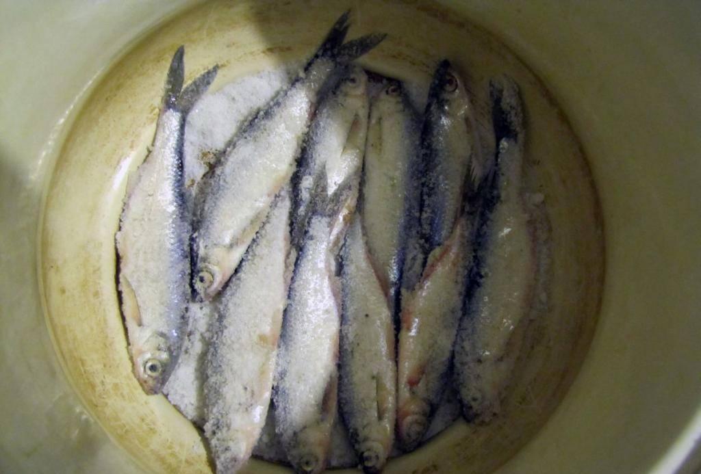 Солим и сушим рыбу