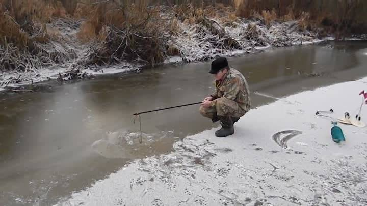 Рыбалка на припяти: особенности ловли сома, видео, выбор снастей