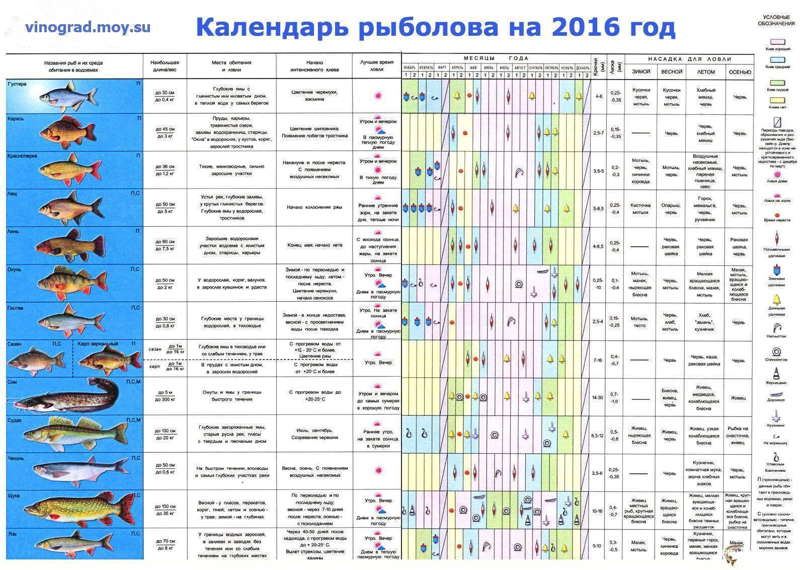 Календарь клева щуки
