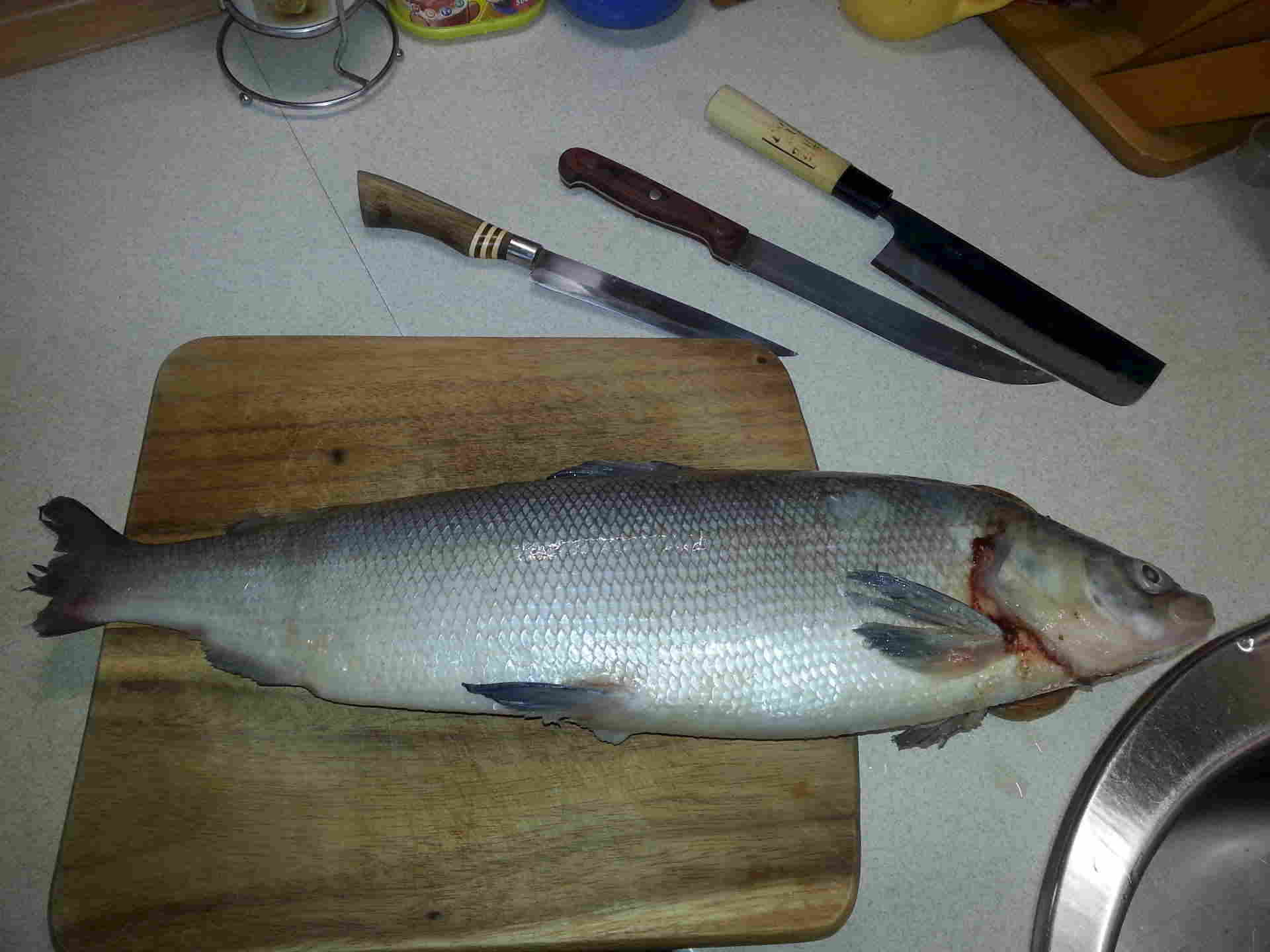 Рыба нельма: подробное описание