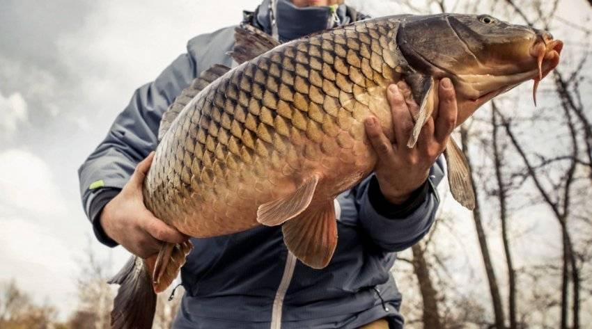 Рыбалка в октябре или сезон трофеев в календаре рыбака