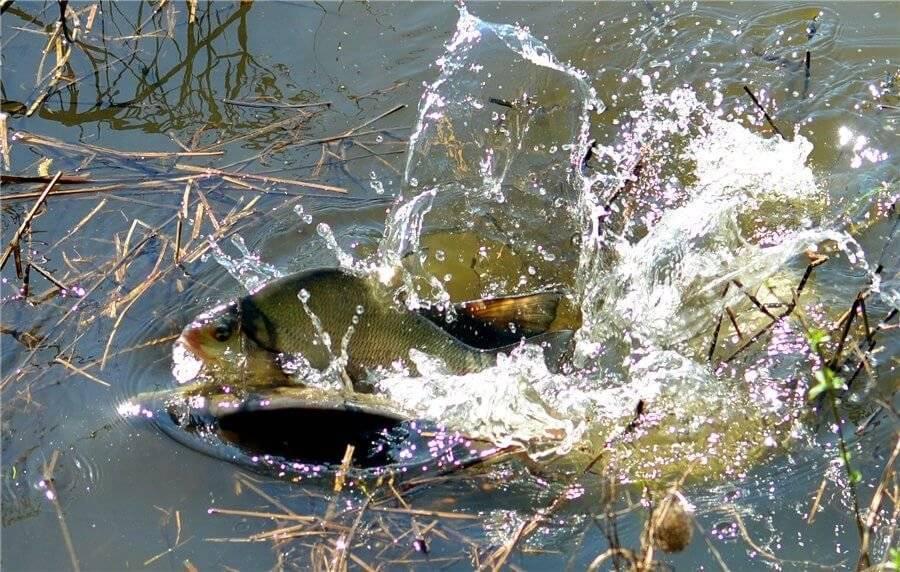 Как зимуют рыбы – основные особенности