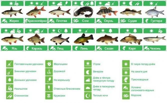 Какое атмосферное давление лучше всего подходит для рыбалки?