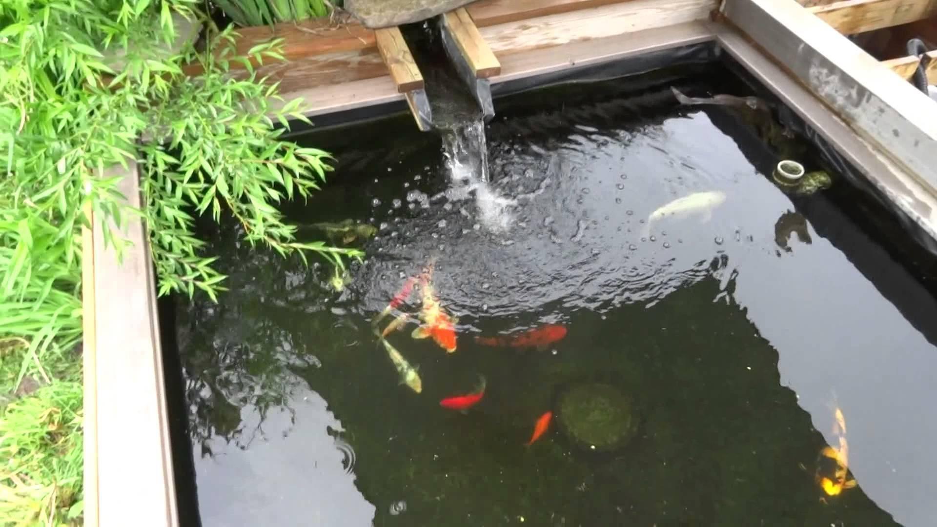 Разведение рыбы в пруду на даче: сооружение водоема, заселение его рыбами, выбор корма