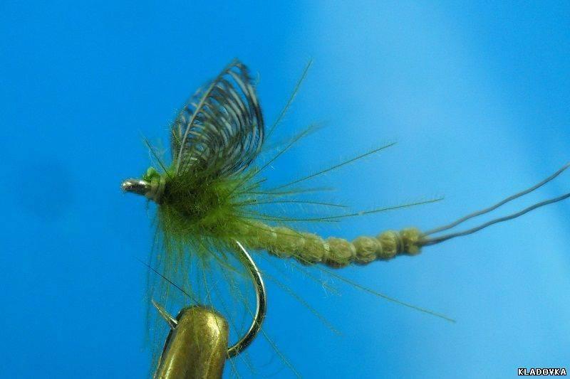 Поденки. образ жизни этих удивительных видов насекомых