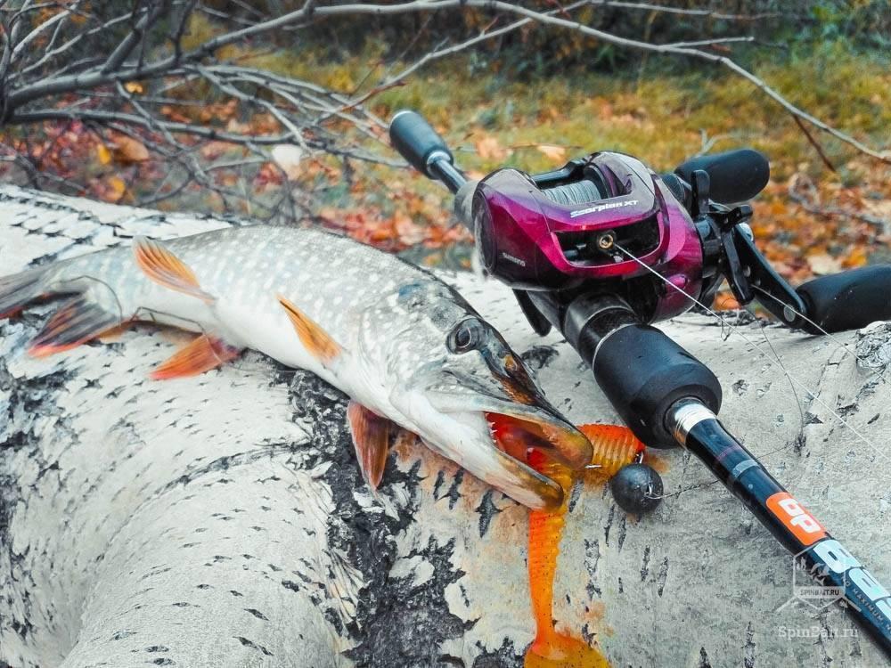 Ловля сазана (33 фото): прикормка для рыбалки. как поймать его на реке? размеры, качество и номер крючков, каша на пружину своими руками