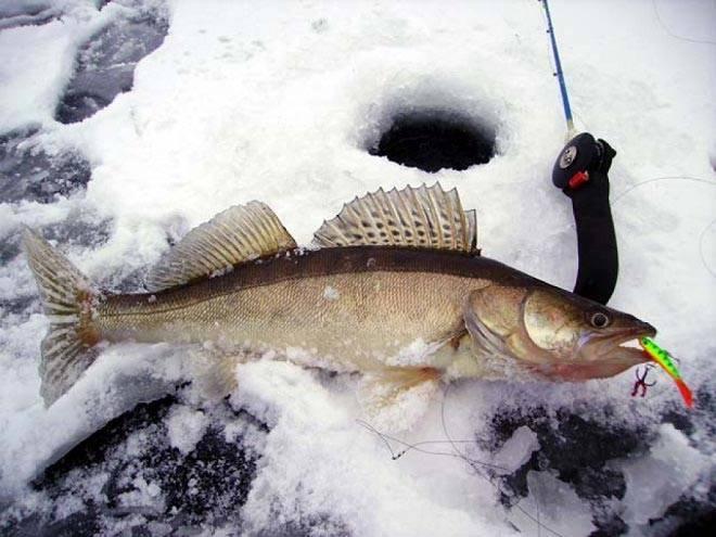Ловля щуки по первому льду на жерлицы