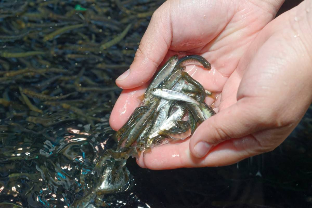 """""""наша форель не отличается от норвежской"""". как растят рыбу, которой не могут накормить белорусов"""