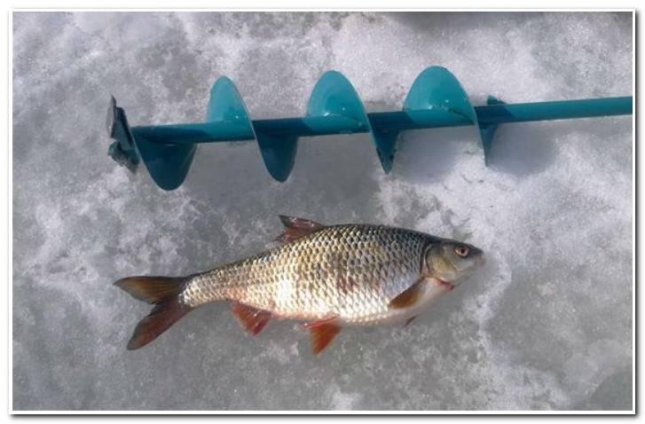 Ряпушка: описание рыбы, фото, обитание, виды, питание, нерест, ловля и выращивание