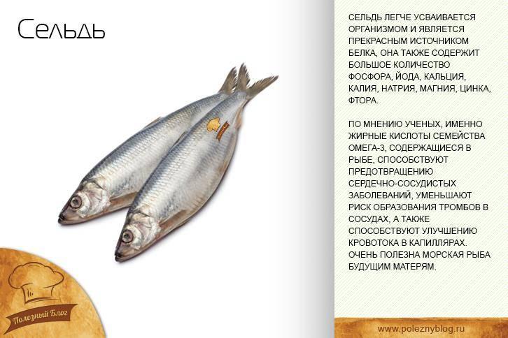 Рыба навага: польза и вред, фото, как приготовить