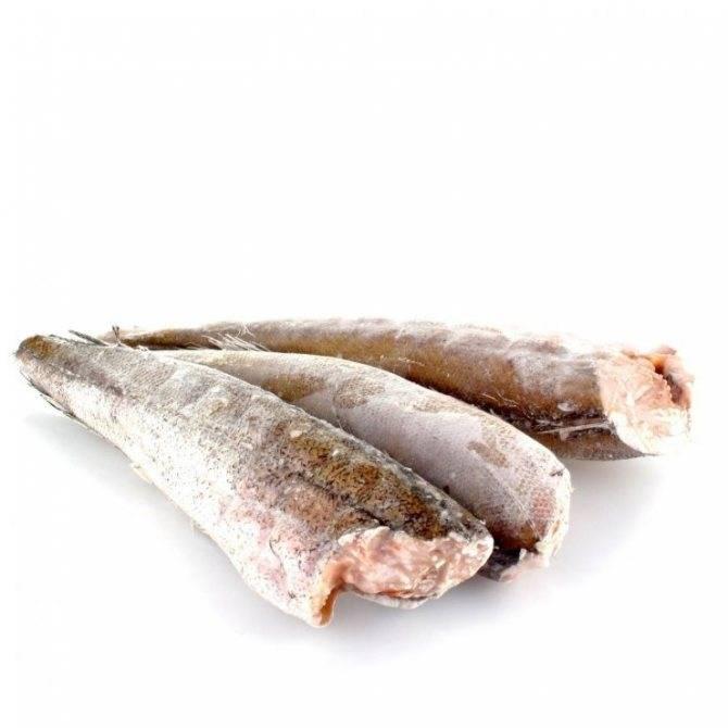 Рыба путассу полза и вред для организма, изучаем полезные свойства