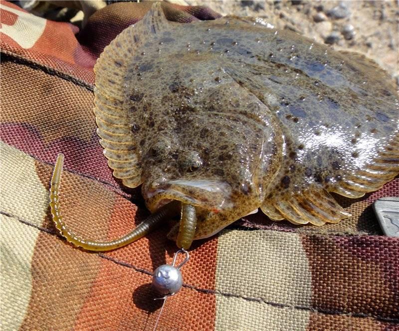 Рыбалка в крыму (60 фото): морская рыбалка на спиннинг с берега, названия рыб в морях и озерах, платные и бесплатные места, ловля пеленгаса на арабатской стрелке