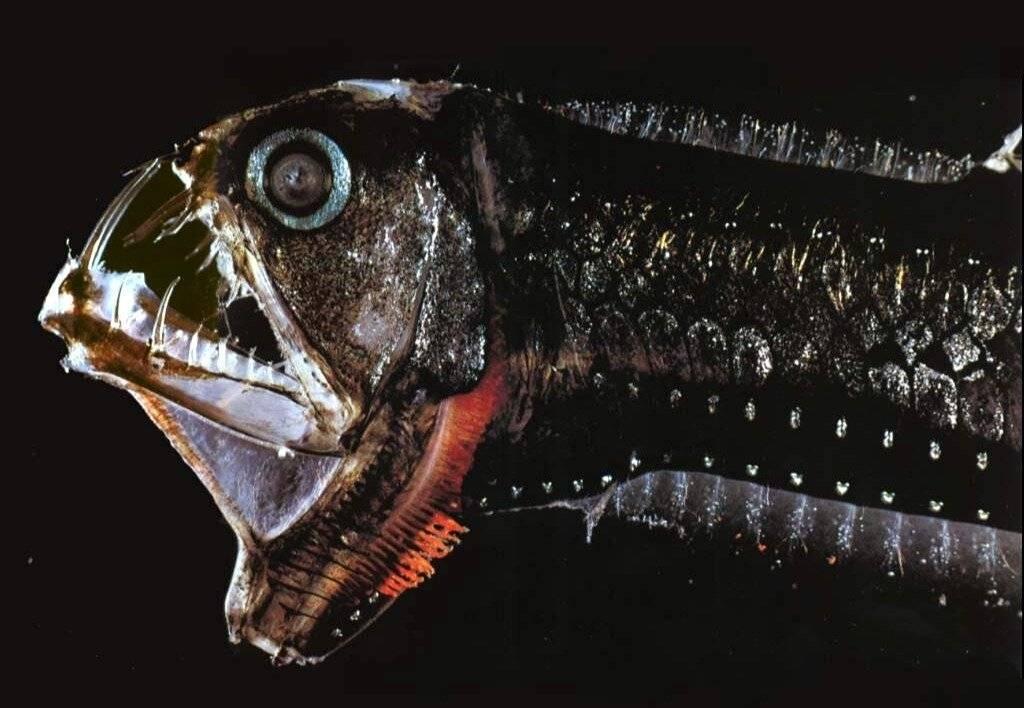 Самые опасные животные океана