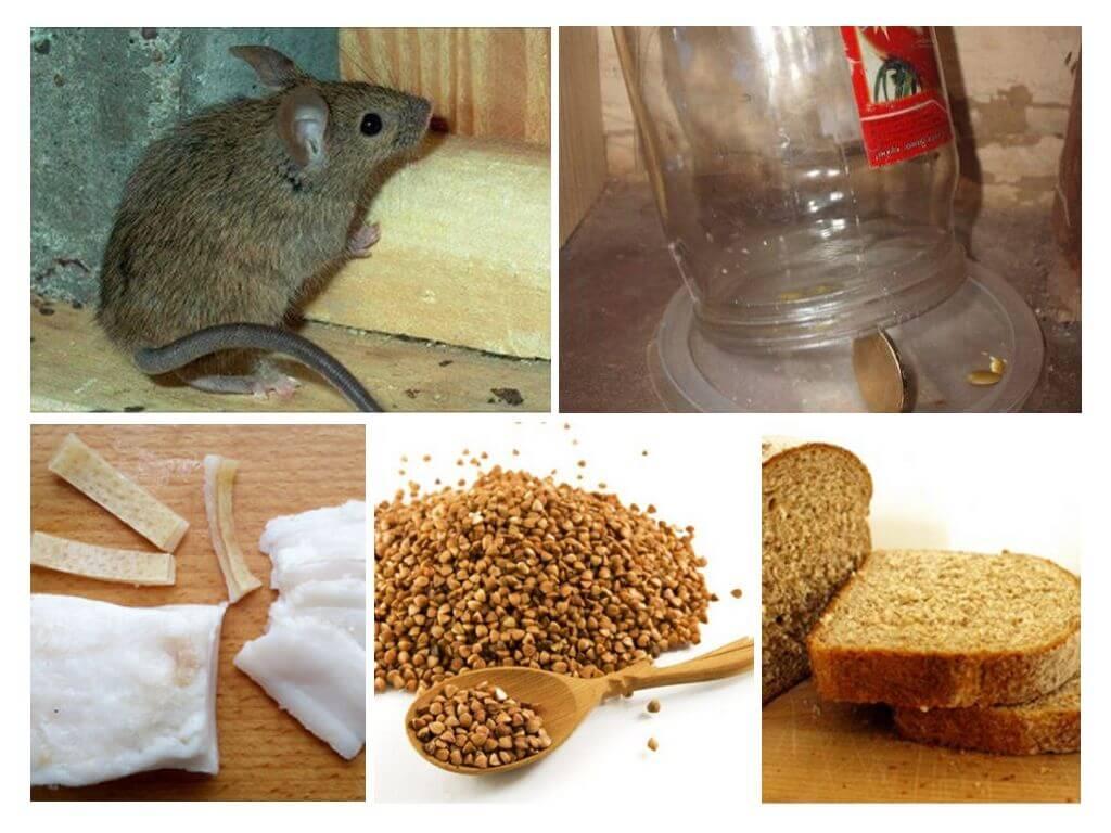 Как поймать мышь в доме и квартире с помощью подручных средств: мышеловка из пластиковой бутылки, ловушки из ведра и других предметов