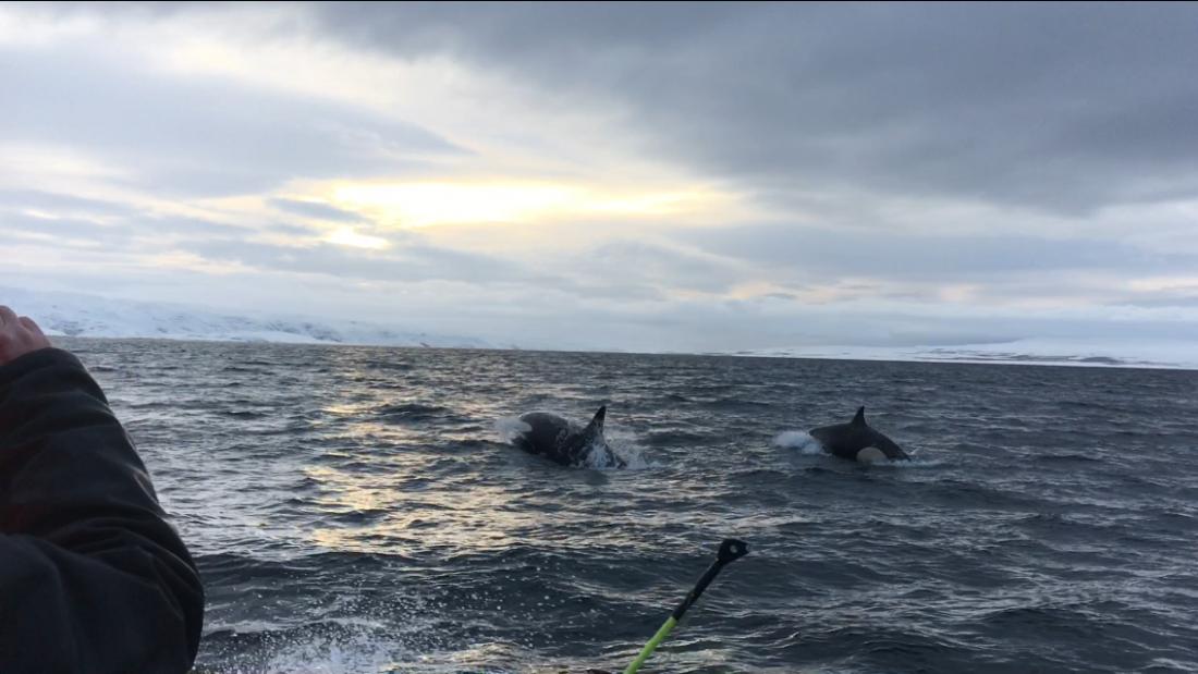 Рыбалка на баренцевом море (выход из п.териберка)