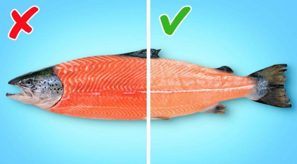 Чем отличаются лосось и семга: описание и приготовление
