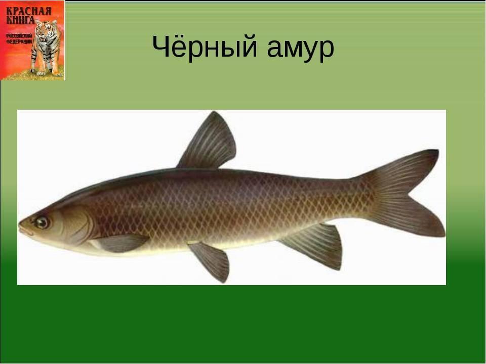 Река амур исток и куда впадает на карте россии - oreke.ru