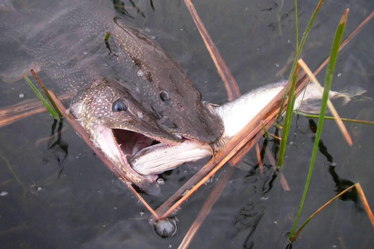 Когда клюет рыба, в какое время лучше ловить (утром или вечером, благоприятные дни)