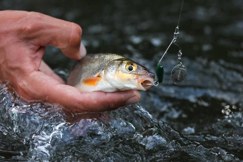Прикормка для рыбца - все про рыбалку