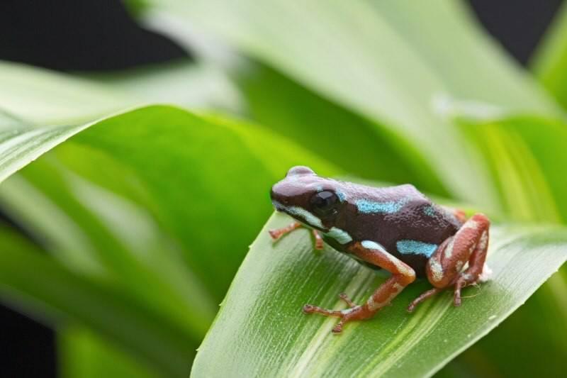 Почему лягушки окрашены в разные цвета?