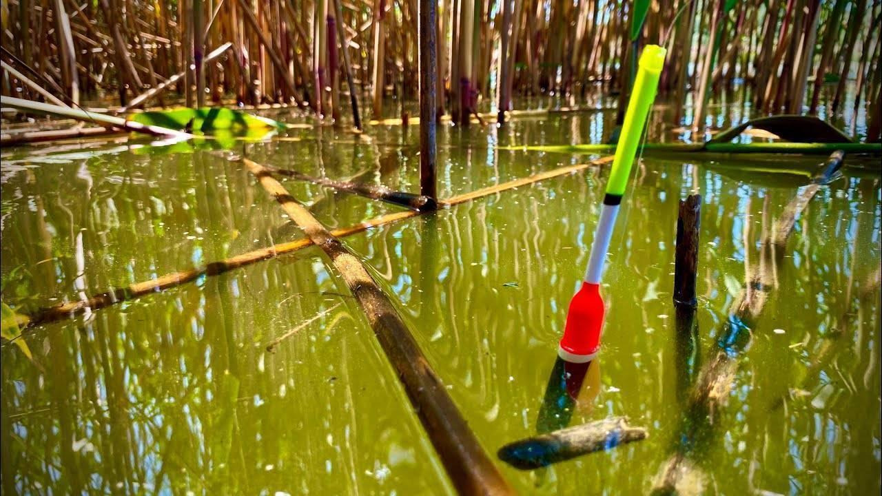 Ловля белого амура в июле: оснастка для ловли белого амура на фидер и поплавочную удочку
