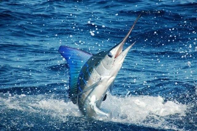 Внешний вид, содержание и размножение рыбы хромис-красавец