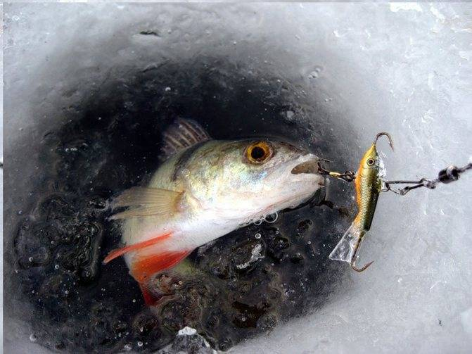 Мормышка коза — уловистая приманка для зимней рыбалки