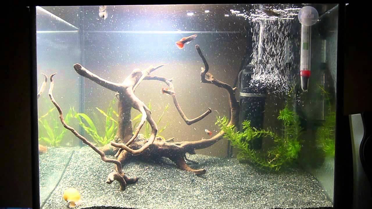 Коряга для аквариума своими руками: подготовка, где взять