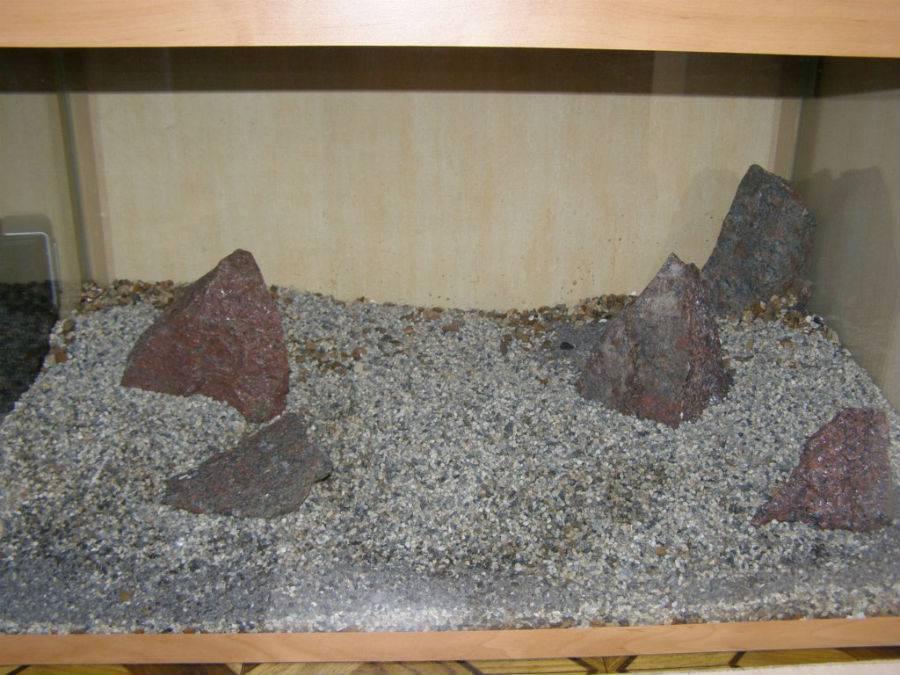 Грунт для аквариума: какой лучше выбрать