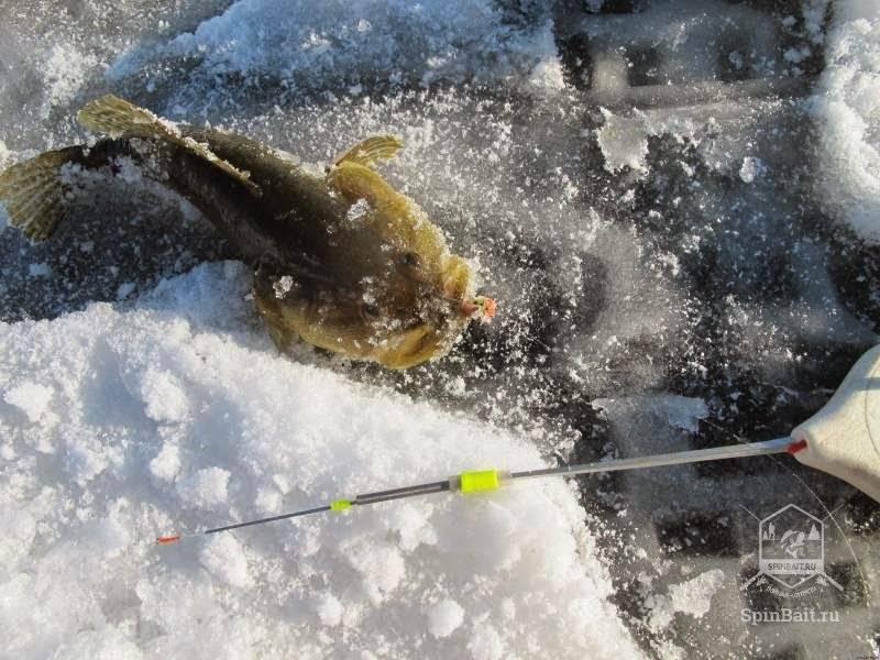 Ротан по первому льду - снасти и тактика ловли