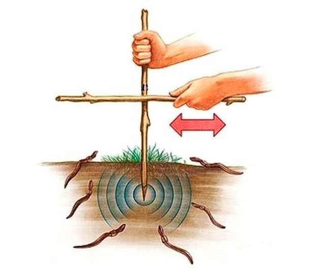 Где и как накопать червей для рыбалки