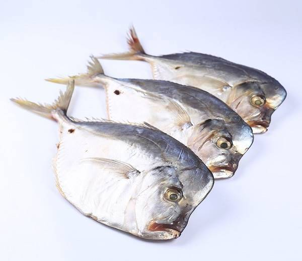 Рыба вомер или селена (лат. selene)