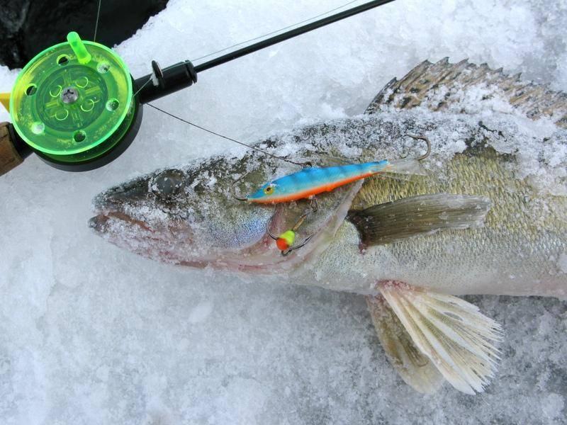 Ловля судака зимой на балансир и блесну, техника вылова в феврале