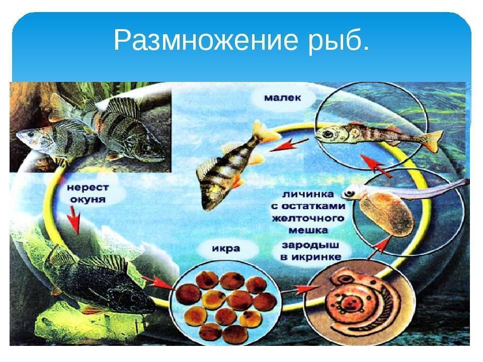 Причины массовой гибели рыбы летом. война дамб. ⋆ rest-river.ru