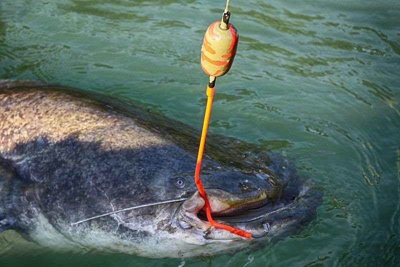 Ловля сома на спиннинг: рыбалка не для слабонервных