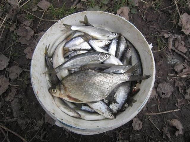 Карта рыболовных мест орловской области | описание и фото