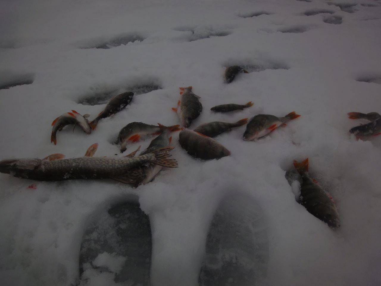 При каком давлении лучше клюет рыба зимой