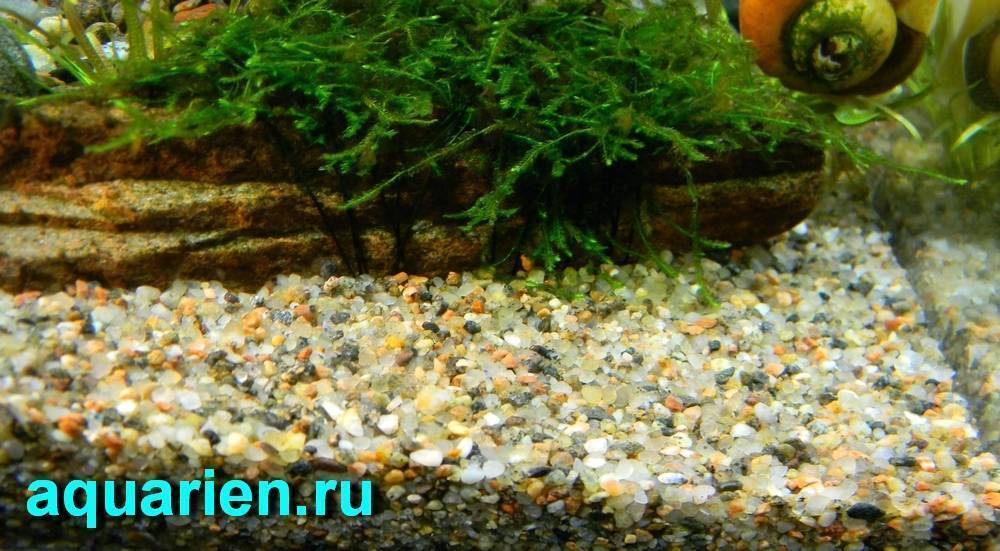 Какой из грунтов лучше для аквариума: виды, его размещение в аквариуме и уход за растениями
